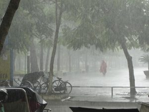 Gainesville's Rainy Season