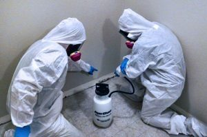 mold remediation company